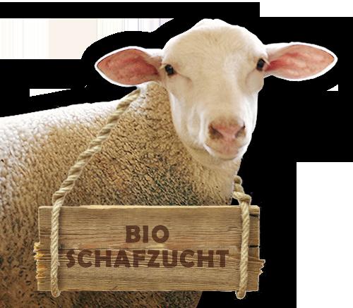 Schaf aus der Bio-Schafzucht Hautzinger