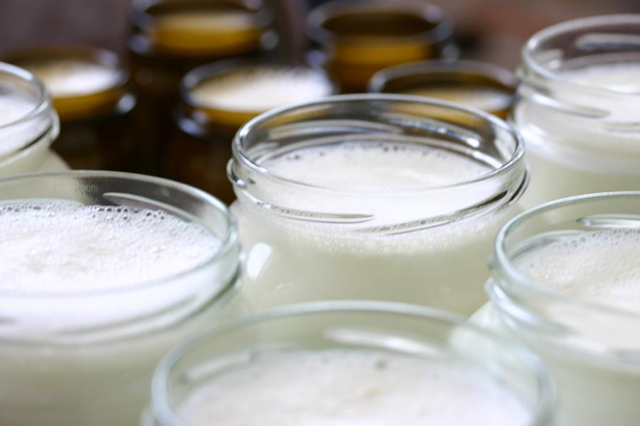 Schafzucht Hautzinger Schafmilchproduktion